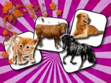 Play Domestic Animal Memory Challenge